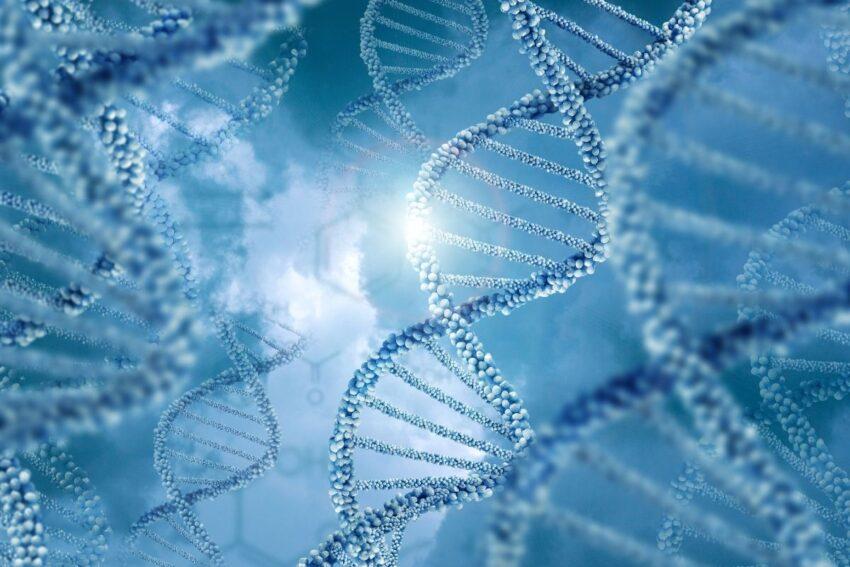 Baskın ve Çekinik (Resesif) Gen