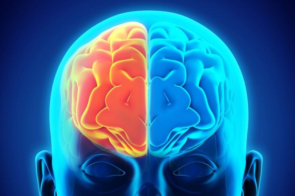 sağ ve sol beyin farkları